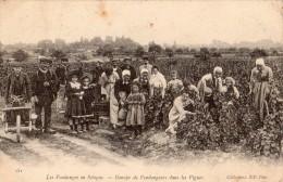 REGION DE BLOIS LES VENDANGES EN SOLOGNE GROUPE DE VENDANGEURS DANS LES VIGNES THME VIGNES VIGNERON - Frankrijk