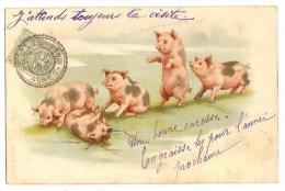 CPA Cochons - Schweine