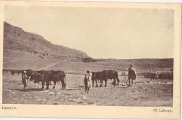 CPA Animée - LESSOUTO - Labours - Lesotho