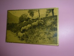 CP Moutons - Altri