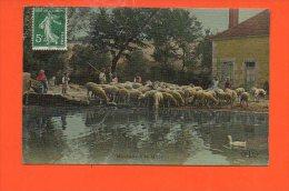 Agriculture -  Moutons à La Mare - La Vie Aux Champs - Elevage