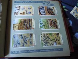 FIGURINE LAVAZZA --- N°79-.  VITA DELLE FORMCHE - Tea & Coffee Manufacturers