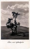 Natur Und Gottesglaube, Fotokarte 1936 - Fotografie