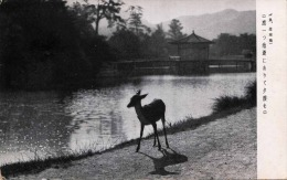 Reh In Japanischer Parkanlage, Orig.japanische Karte Um 1910? - Japan