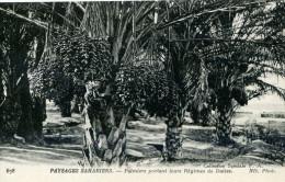 PAYSAGES SAHARIENS...PALMIERS PORTANT LEUR REGIMES DE DATTES......CPA - Algeria
