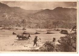 ASIE----INDONESIE-----sawahlandschap Preanger-pemandangan Di Pasundan--voir 2 Scans - Indonésie