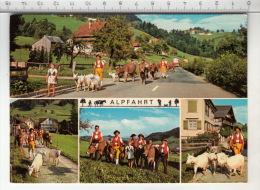 Alpfahrt - Chèvre / Ziege / Goat / Capra - Animaux & Faune