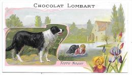 CHROMO  - CHOCOLAT LOMBART - Terre Neuve - Lombart