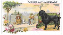 CHROMO  - CHOCOLAT LOMBART - Caniche - Lombart