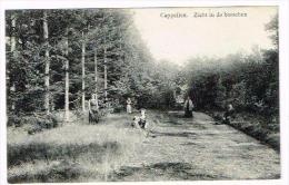 Cappellen - Zicht In De Bosschen - Kapellen