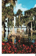 Cypress Gardens, Florida  Cypress Trees Grow Far Out Into The Waters Of Lake Eloise - Etats-Unis