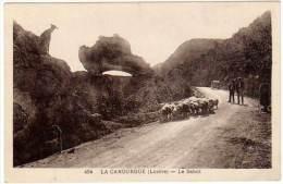 La Canourgue, Le Sabot (moutons, Berger) - France