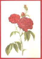 CARTOLINA NV ITALIA - REDOUTE'  - Rose Rosse - 10 X 15 - Pittura & Quadri