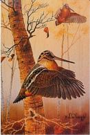 Jagd Hunting Chasse  Waldschnepfe  Henne  Woodcock  Snipe  Becasse  Oiseaux   Modern  Postcard - Hunting