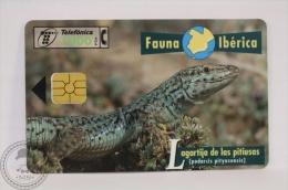 Spanish Collectible  Phone Card Telefonica: Lagartija De Las Pitiusas (Podarcis Pityusensis)/ Ibiza Wall Lizard - Tarjetas Telefónicas