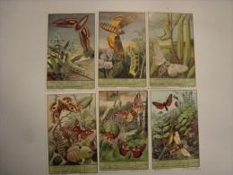 Liebig - Série Complète De 6 Figurines - Lépidoptères Nocturnes (papillons) - S1497  (lot N°7) - Liebig