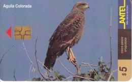 URUGUAY - Bird, Aguila Colorada(109a), 03/00, Used - Uruguay