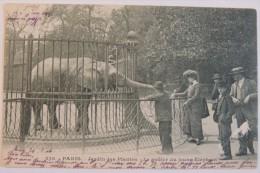 Paris - Jardin Des Plantes  –   Le Goûter Du Jeune éléphant  - 1904  /  Zoo - Éléphants