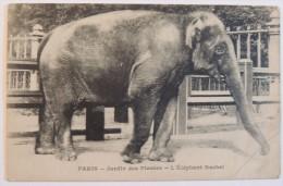 Paris Jardin Des Plantes  :   L'éléphant Rachel  - 1915   -  Zoo - Parcs, Jardins