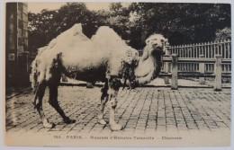 Muséum D'Histoire Naturelle :  Chameau  –  Paris Jardin Des Plantes  Zoo - Parcs, Jardins