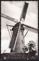 HAMONT ACHEL : Molen Coolen - Moulin - België