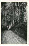 35 SAINT BRICE EN COGLES Le Rocher Portail - Le Sous Bois - France