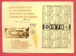 K1669 / 1970  Vratsa - INSTITUTE FOR ANTI-disease Virus PIG  Calendar Calendrier Kalender - Bulgaria Bulgarie Bulgarien - Petit Format : 1961-70