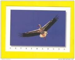 POSTCARD SPAIN EXTREMADURA CIGÜENA STORKS STORK Bird - Pájaros