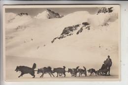 HUNDE - Schlittenhunde / Polarhunde, Jungfraujoch / CH, 1930 - Hunde