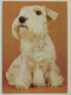 Dog  Chien  Hund / Sealyham Terier - Cani