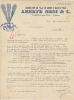 Italie, Tavola, Exportation Paille De Sorgho à Balais Arsete Nesi & Cie 1923 Voir Explications) - Italie