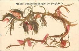 Depts Divers -  Ref M 831 -  Monaco - Musee Oceanographique - Algues Sechees Veritables - Carte Bon Etat - - Musée Océanographique