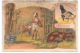 CHROMO  - CHOCOLAT DE LA COMPAGNIE FRANCAISE - CEYLAN - Lombart