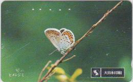 BUTTERFLY - JAPAN - H109 - 110-011 - Vlinders