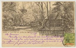 Kioste Kiosque Au Bord D' Un Lac Jardin Pamplemousses Maximum Palm Tree Envoi Ch. De Boucherolle - Maurice