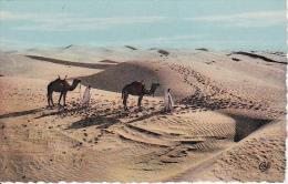 CPSM Scenes Et Types - Dunes De Sable (4444) - Algerien