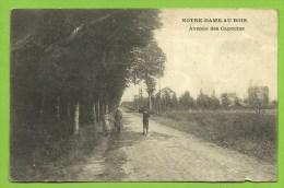 NOTRE-DAME-AU-BOIS  / Avenue Des Capucins - Kapelle-op-den-Bos