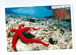 Portugal Maximum - Starfish - Estrela Do Mar - Invertebrates Invertebrados Marinhos - Açores - Ponta Delgada 2010 - Schaaldieren