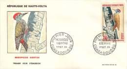 HAUTE-VOLTA  1964  Mesopicos Goetae  Picbois - Oiseau Poste Aérienne - FDC Non Adressé - Obervolta (1958-1984)