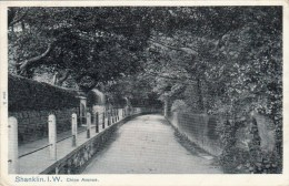 Shanklin I.W. - Chine Avenue - 1905 - Angleterre
