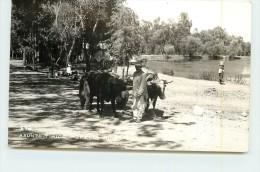 ASTUNO TIPICO MORELIA MICH (carte Photo ). - Mexique