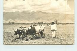 Campesino Arando Tierra Oaxaca (carte Photo ). - Mexique