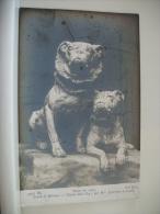 LOT DE 3 CARTES ANCIENNES REPRESENTANT DES PEINTURES SUR LES CHIENS - Perros