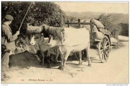 64-ATTELAGE BASQUE-BOEUFS-Gros Plan - France