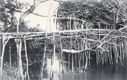 KONGO (Mayombe) - Mission De Kango, Karte Nicht Gelaufen Um 1905, Sehr Gute Erhaltung - Autres