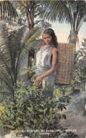Sri Lanka   Ceylon   Tea Plucking By Tamil Cooly Woman - Asie