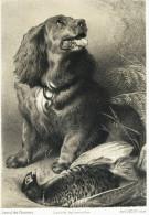 Chien  -  Journal Des Chasseurs ,  Avril 1855 - GRAVURE -  LE COCKER ET LE FAISAN  -  VOILA - Chasse ? - Engravings