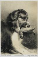 Chien  -  Journal Des Chasseurs ,  Février 1855 - GRAVURE -  LE CHIEN ET LE GIBIER  -  APPORTE - Chasse ? Rare - Gravure