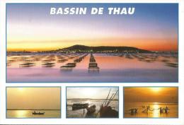CPM CARTE POSTALE MODERNE - 34 - HERAULT - Bassin De Thau  écrite  Timbrée 2008 - Frankreich