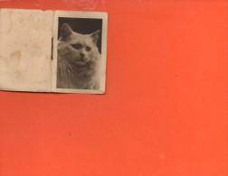 Calendrier Petit Format - Année 1946 - Chat - Calendriers